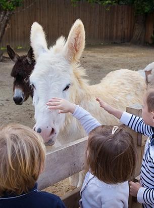 Activité animaux enfant